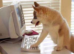 poze-haioase-poze-animale-amuzante-caini-internet-animalici